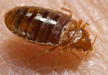 bed bug heat treatment systems